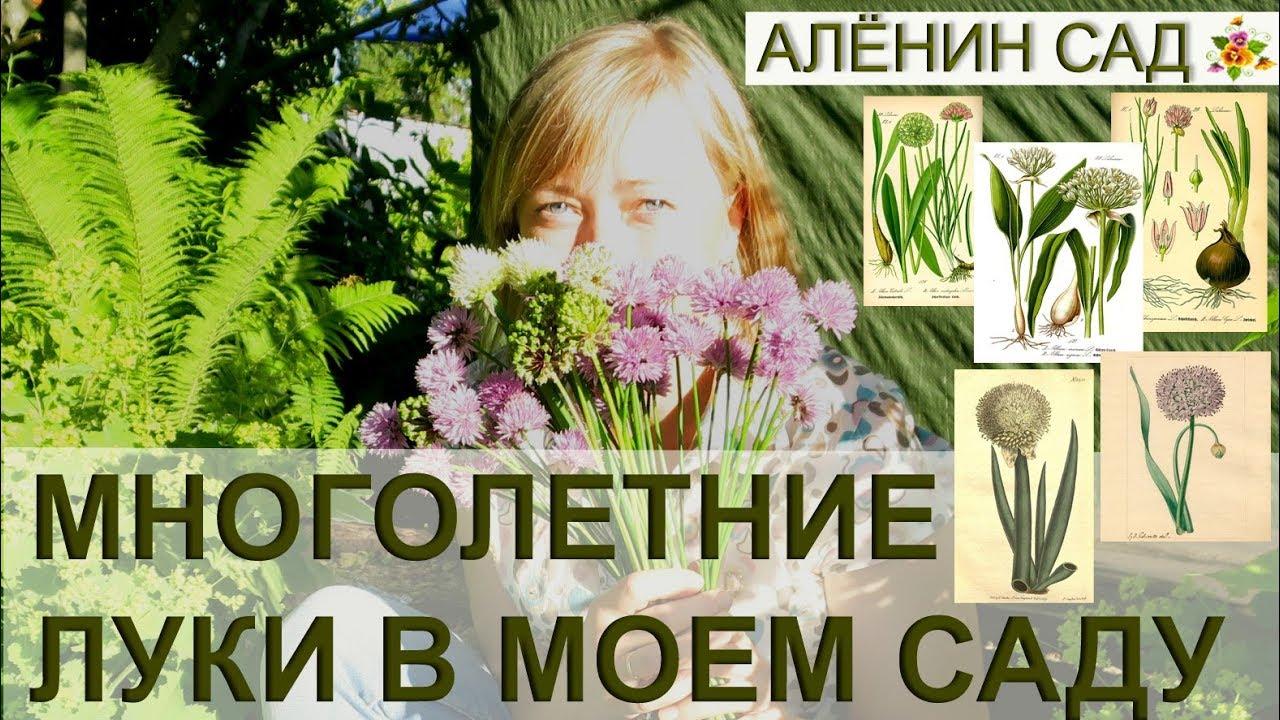 5 видов лука в моем саду / Вкусные и красивые многолетние луки / Как размножать лук