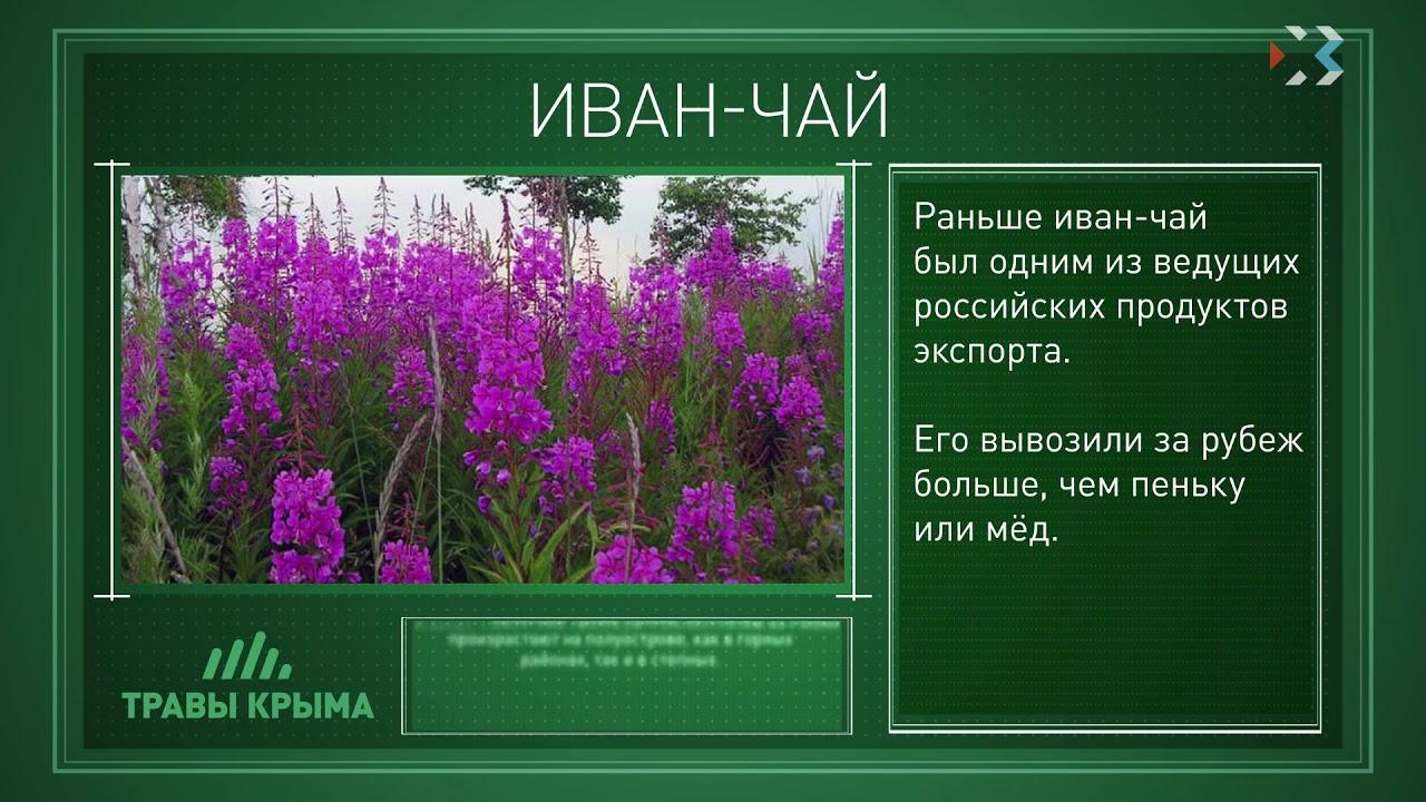 лекарственные травы крыма фото и описание микрософты такие