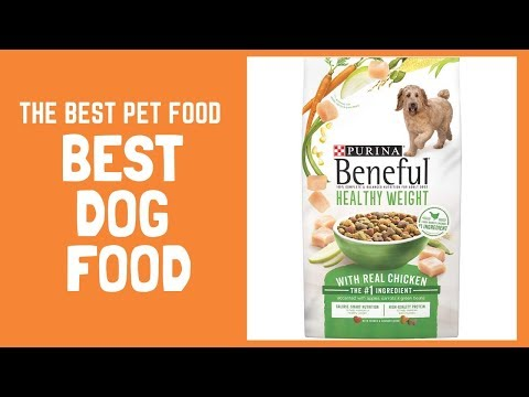 Best Dog Food Brand For Dogs, Harness Training My COCKatiel 2019