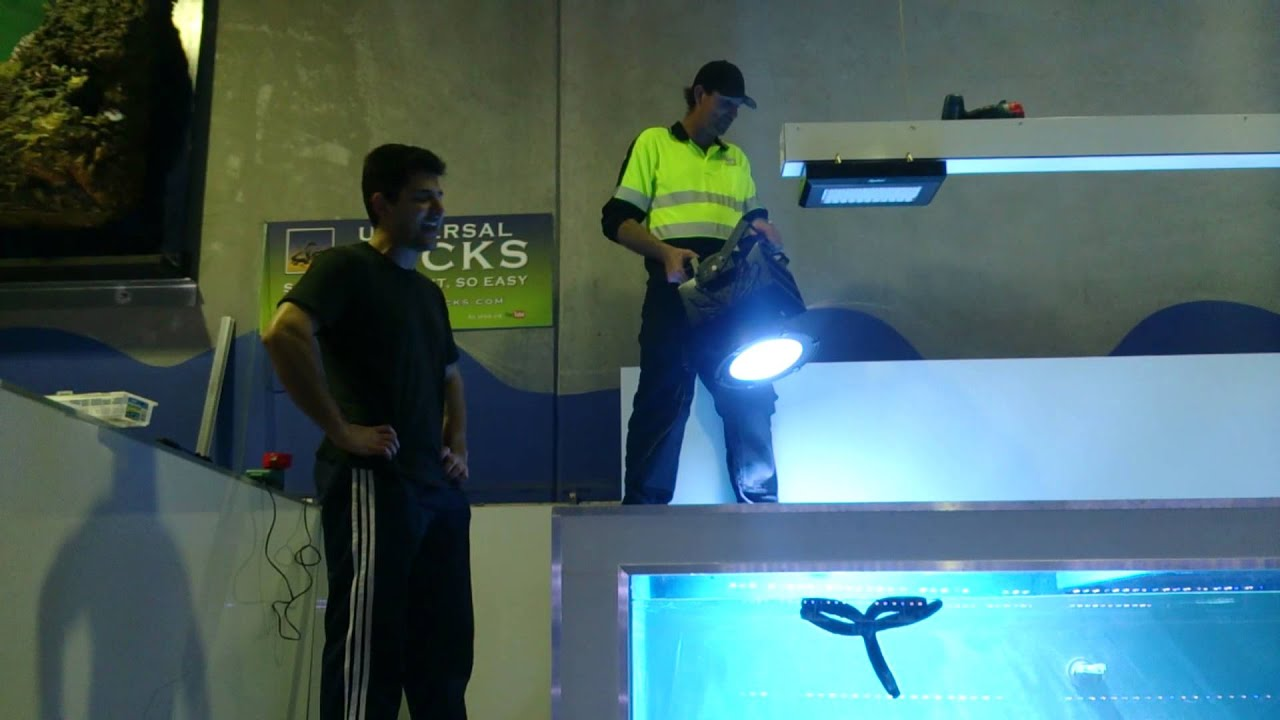 New maxspect commercial bright led flood lights youtube mozeypictures Gallery