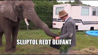 Slijptol redt olifant Buba uit handen Animal Rights