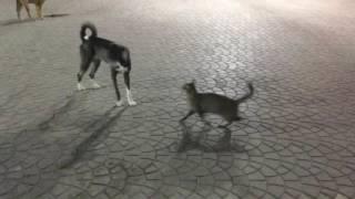 Египет . Хургада. Коты и собаки сами себе предоставлены.