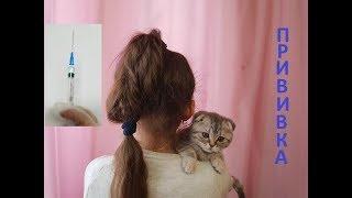 Нужно ли делать прививку кошкам? На приеме у ветеринара