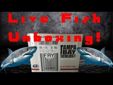 Online fish store unboxing, rare African Cichlid's