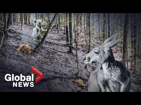 After Australia's wildfires: What happens when 1 billion animals die?