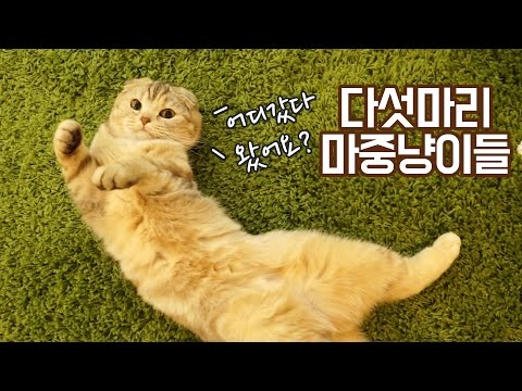 다섯마리 마중냥이들- 집사가 집으로 돌아올 때 고양이들 반응은?