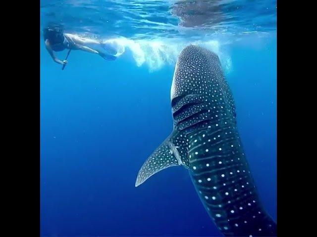 Cozumel Whale Shark Tours
