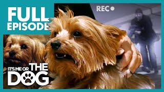 Dogs Stolen From Their Owners: Widget and Gizmo | Full Episode | It's Me or the Dog
