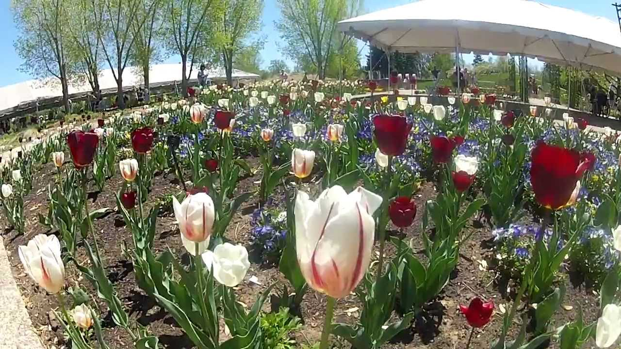 Denver botanic gardens tulips youtube for Botanic gardens denver free days