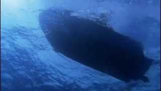 Whale Life Documentary