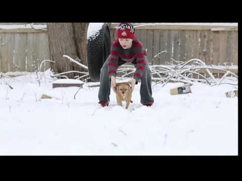 Watch in Hd ..... a fat Chihuahua running in slow motion in the snow