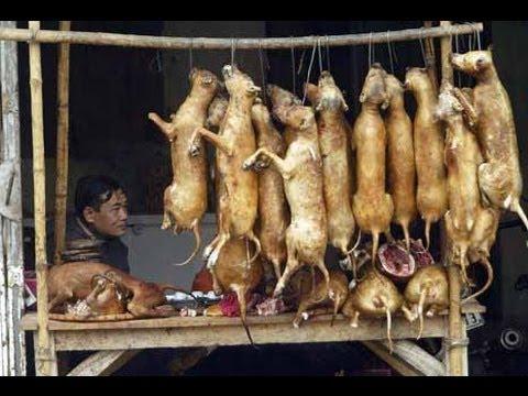 COMEN GATOS Y PERROS. China. Pobres animales