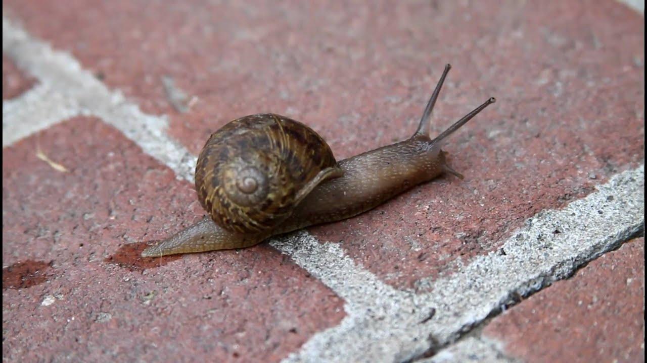 Slow Snail Gif