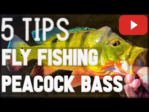 HOW TO FLY FISH For Peacock Bass