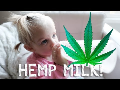 hemp-milk-hunt:-the-search-for-a-healthy-milk-alternative