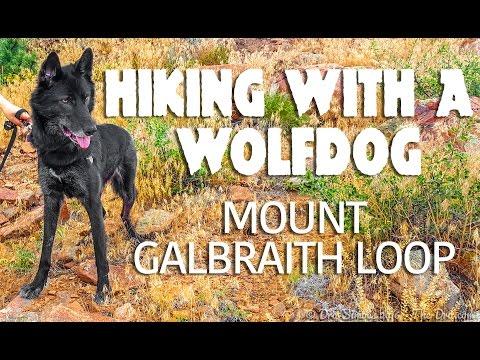 Hiking w/ a Wolfdog - Mount Galbraith Loop