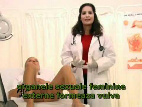 Organe sexuale externe feminine