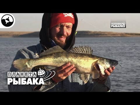 Судак на донку. Узбекистан   Планета рыбака