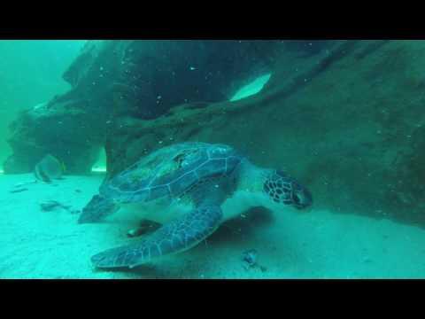 Two Oceans Aquarium 3
