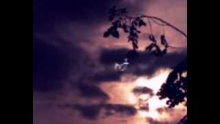 moonlit - jogeir liljedahl - video
