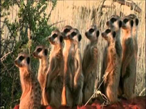Le Specie Animali in Lotta per la Sopravvivenza 2.wmv