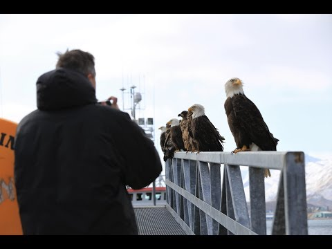 3/26/18 - Eagle & Raptor News