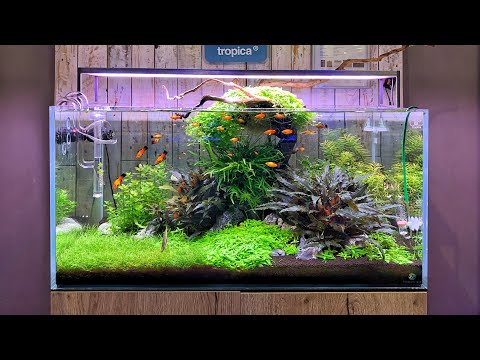 BEAUTIFUL Aquascapes At Aquajardin Aquarium Store!