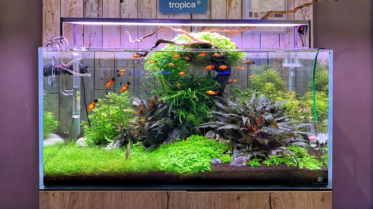 Beautiful Aquascapes At Aquajardin Aquarium Store Youtube