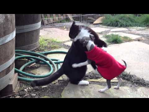 Cat And Puppy Battle In The Garden