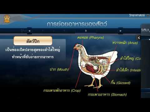 ระบบย่อยอาหารของสัตว์ วิทยาศาสตร์ ม.2