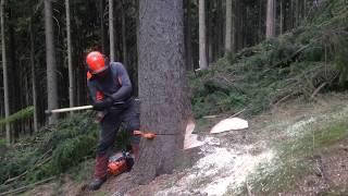 Kácení Stromu.