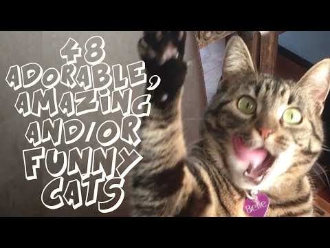 48 FUNNY, ADORABLE or AMAZING CATS!