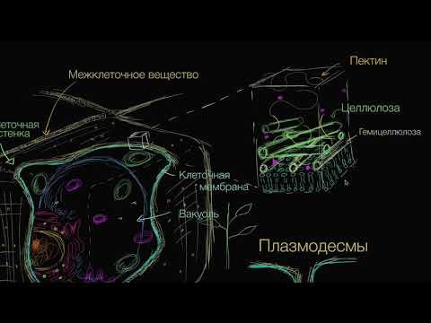 Клеточная стенка растений (видео 10) | Строение клетки | Биология