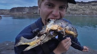 River Carp Cooked Over an Open Fire (Catch and Cook)