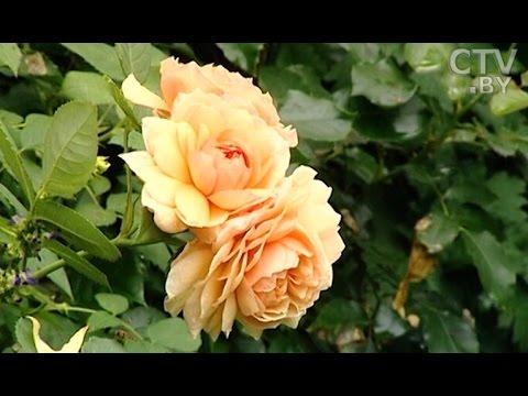 видео: Создать сад мечты: секреты садоводства от Юлии Тадеуш