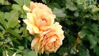 Создать сад мечты: секреты садоводства от Юлии Тадеуш