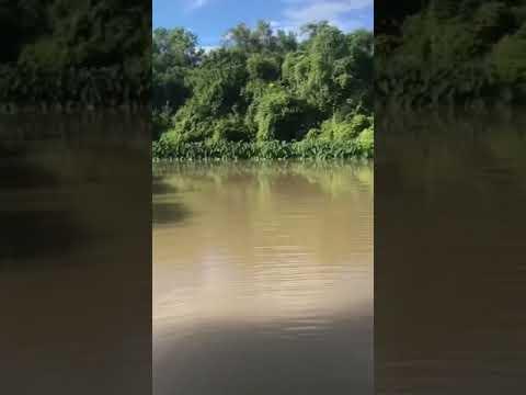 Catching Huge Catfish In Bayou Lafourche!