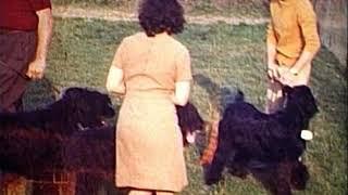 1970  Réunion de Briards