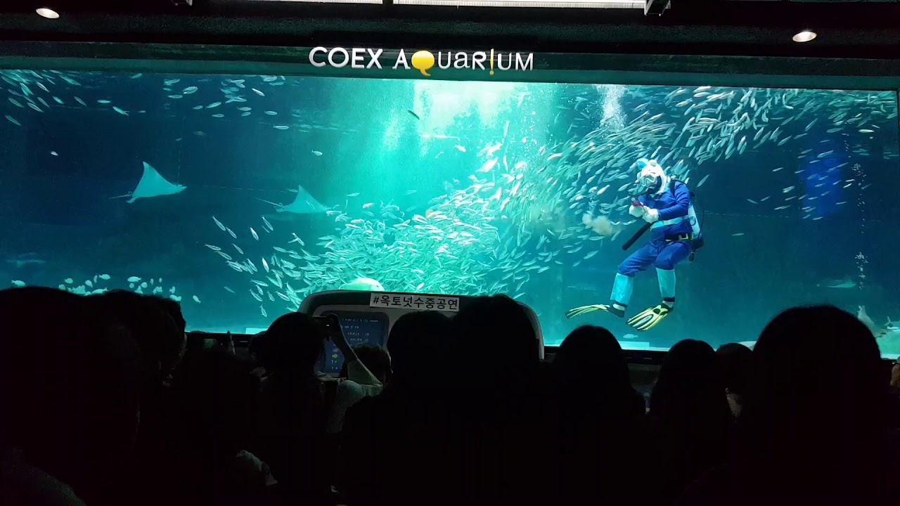 20180624韓國首爾COEX水族館深藍廣場箱子裡的開場 - YouTube