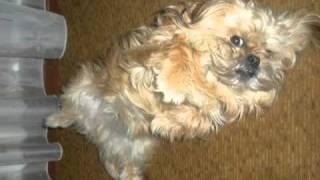 Потерялась собака В Саранске!.mpg