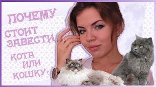 Почему стоит завести кота или кошку?
