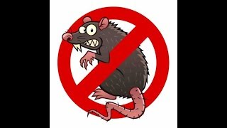 patkány férgek paraziták