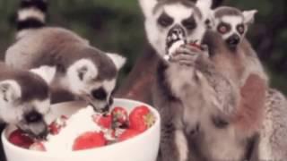 Смешное видео о животных.Забавные животные.Прикольные животные,Для детей.