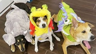 CUTE PUPPY DOG COSTUME CONTEST! (9.21.15 - Day 2336)