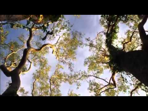 Hunting The Hidden Dimension - NOVA (11)