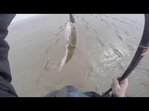 Beachcasting for Flounder