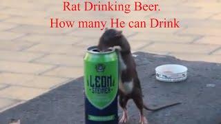 Rat Drinking Beer. Charles Bridge Prague - Europe Trip Episode 7