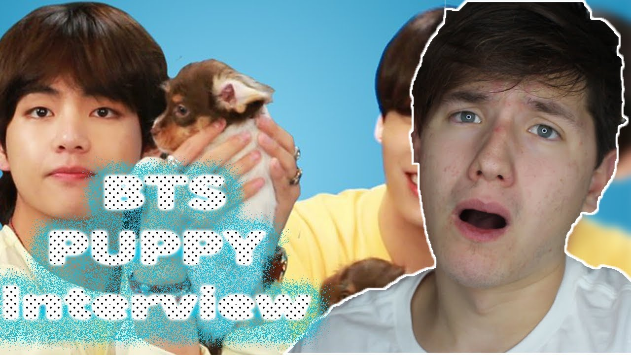 BTS Plays With Puppies While Answering Fan Questions REACTION I cant with all the cuteness 😫