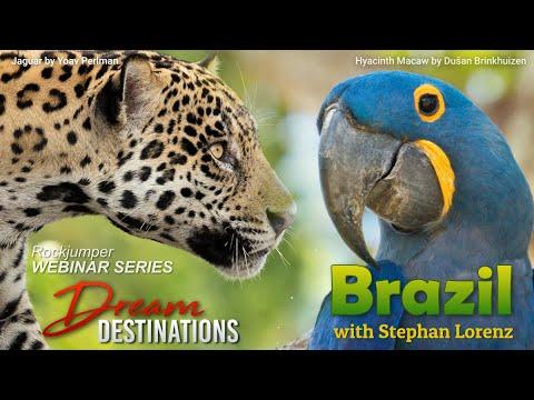 Webinar: Brazil Pantanal with Stephan Lorenz