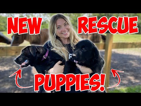 TWO NEW RESCUE PUPPIES *CUTE ANIMALS*